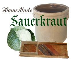 Home Made Sauerkraut. Late season cabbage makes better sauerkraut. #canning #sauerkraut #crock