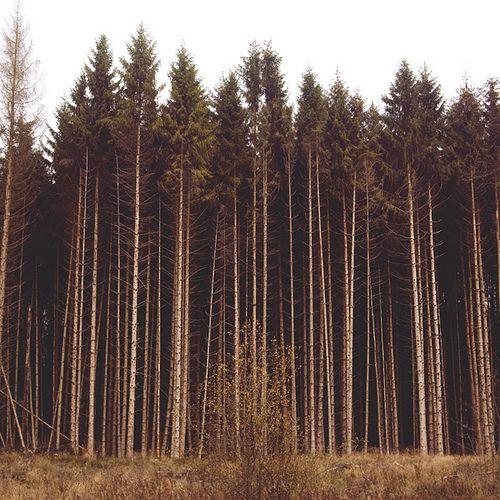 ahhhhh i love trees