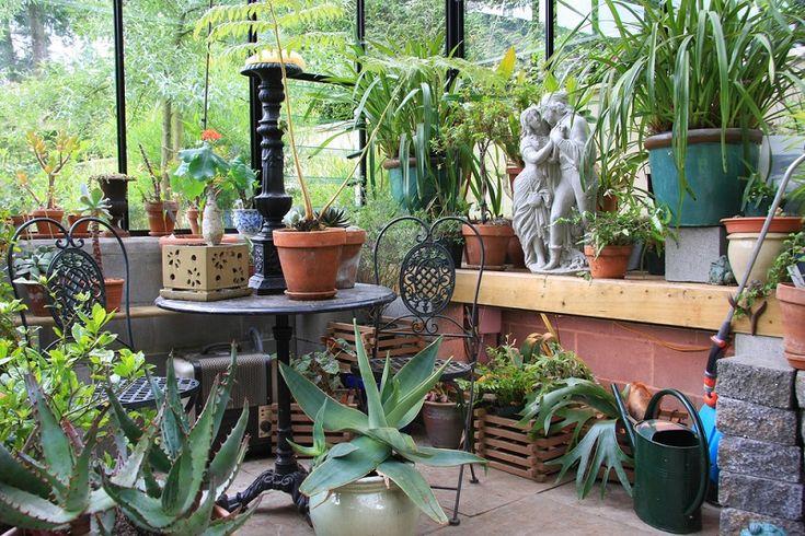 Ezek a legjobb módjai annak, hogy házi körülmények között lássad el tápanyaggal a szobanövényeidet; ezektől még a száraz bokrok is életre kelnek! Egy teáskanálnyi és… - Bidista.com - A TippLista!