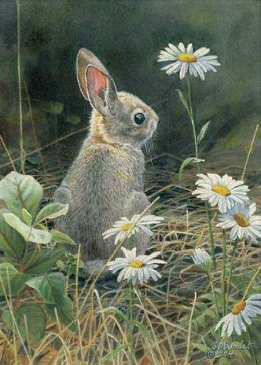 Young Cottontail by Susan Bourdet