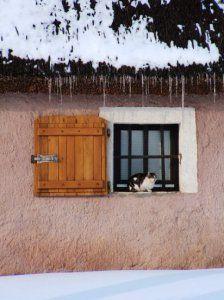 Cica az ablakban