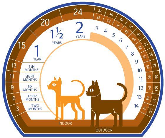 ¿Cómo calcular la edad de un gato?