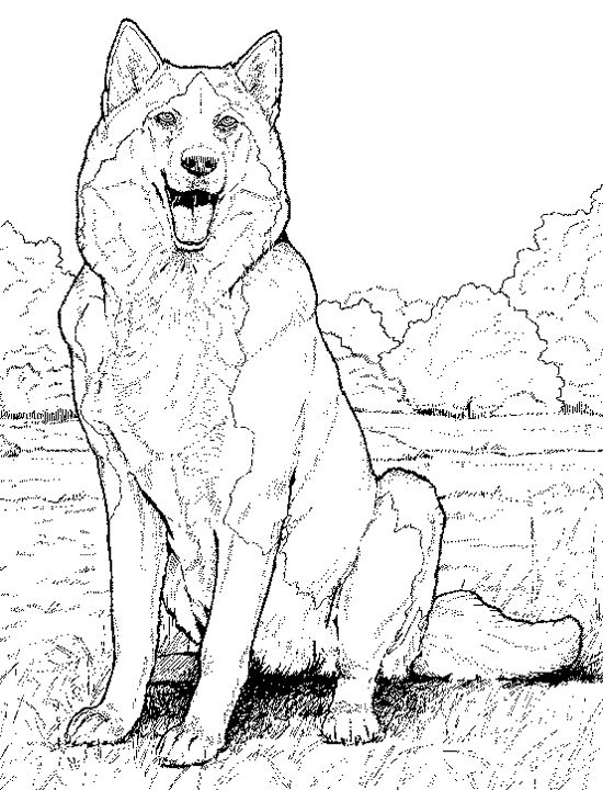 Stunning Realistic Werewolf Coloring Pages Images Coloring Page