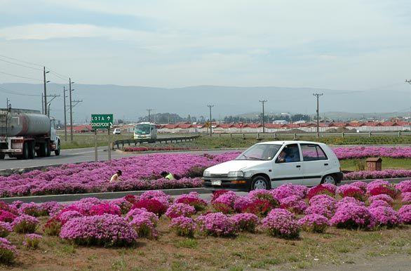 Rotonda ingreso a Lagunillas, Coronel y Lota. Fotos de Concepción: Paisajes y Fotografías de Chile Central