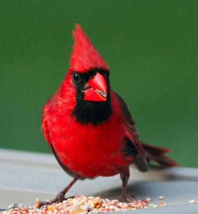 les 25 meilleures id es de la cat gorie signification cardinal rouge sur pinterest les. Black Bedroom Furniture Sets. Home Design Ideas