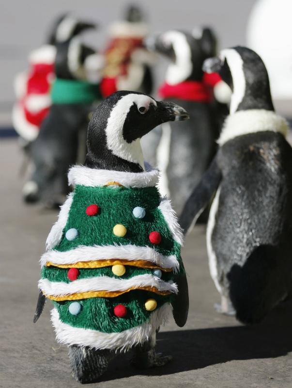 Omg cute penguins,!!!