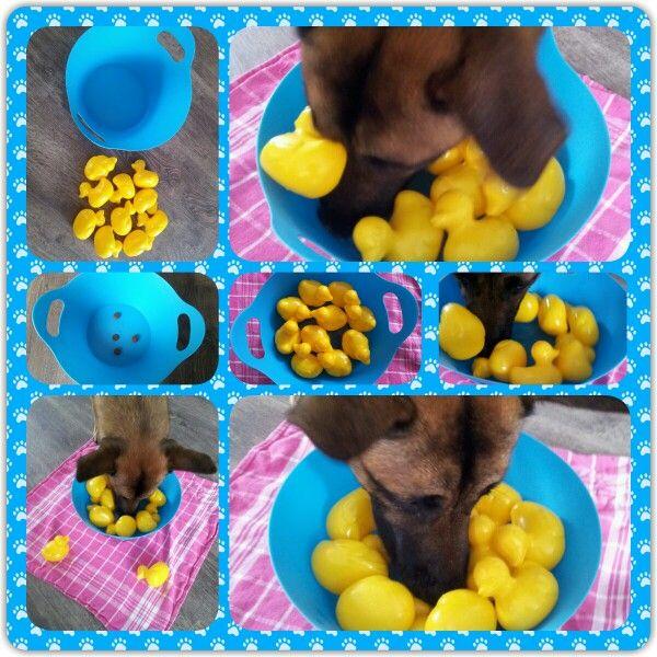 Spel 28 (hondenspel hond spel denkwerk hersenwerk brain dog game play diy)  www.facebook.com/denkspellenvoorjehond
