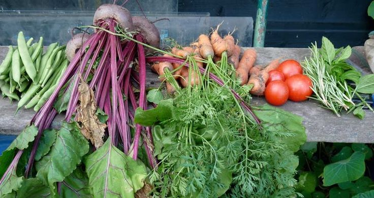 National Trust Landscape Collection | Blog | National Vegetarian Week | Image of homegrown vegetables