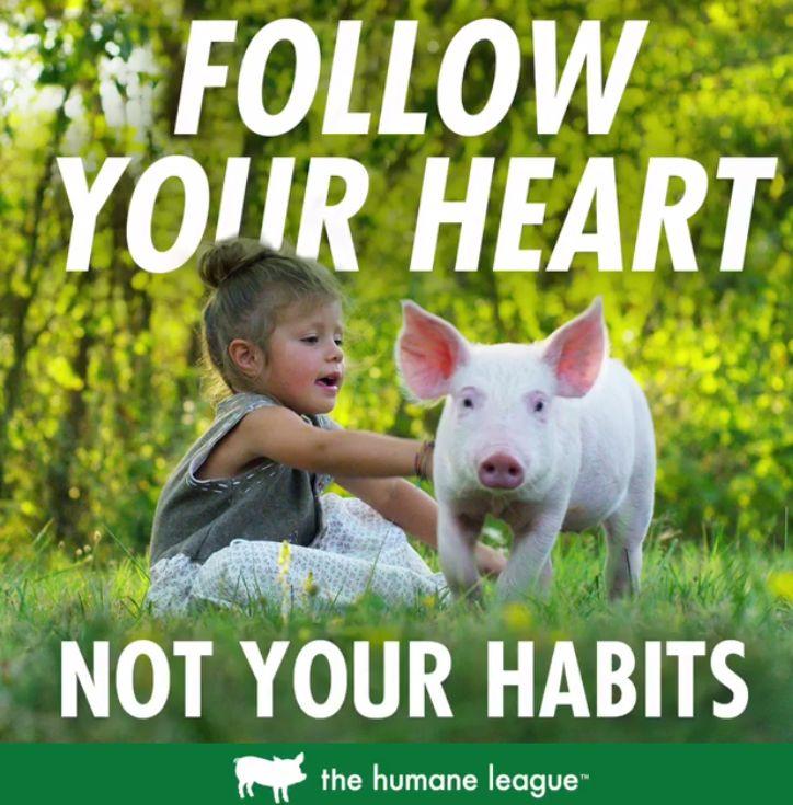 Schweine sind wie Hunde, lustige Lebensgefährten...