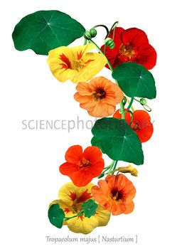 10 best flowers und fruits images on pinterest for Tattoo shops in mcallen