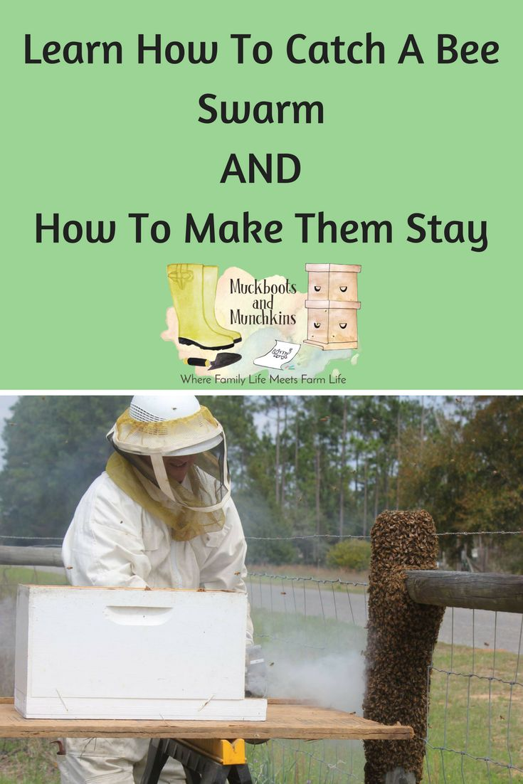 Vinyl Decals Near Me >> 17 Best ideas about Bees on Pinterest | Beekeeping, Organic store near me and Backyard beekeeping