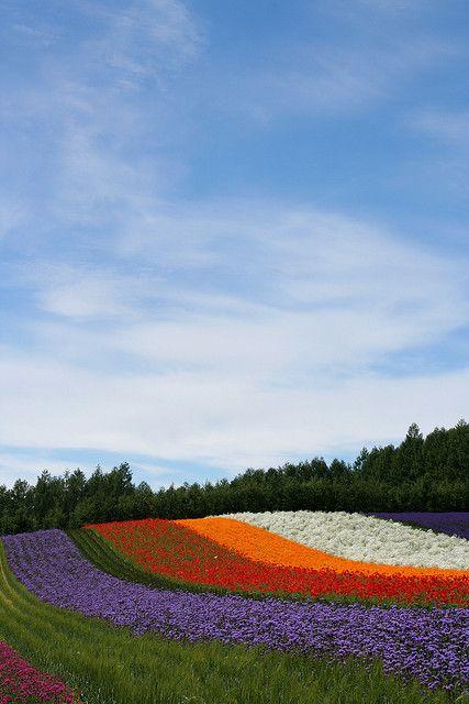 Flower Rainbow, Farm Tomita, Hokkaido, Japan.