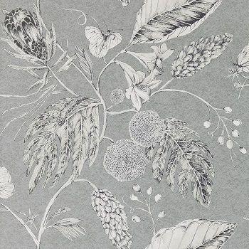 wallpaper amborella - Google Search