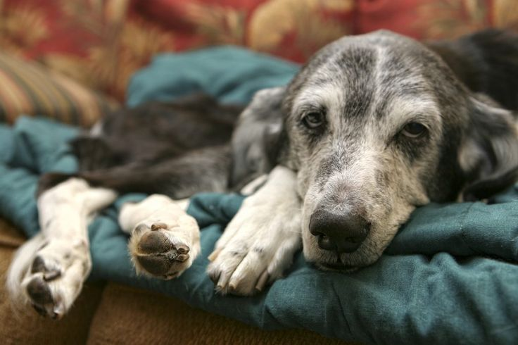 The Facts About Canine Distemper Virus | Union Lake Veterinary Hospital Blog