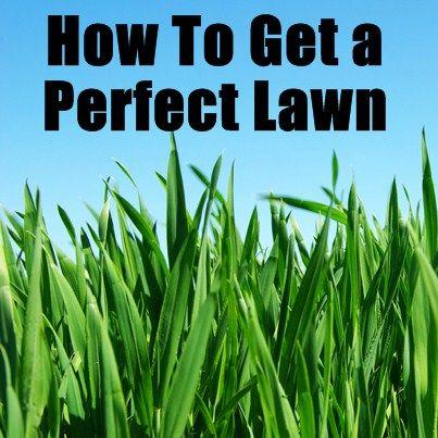 how to get rid of kikuyu grass organically