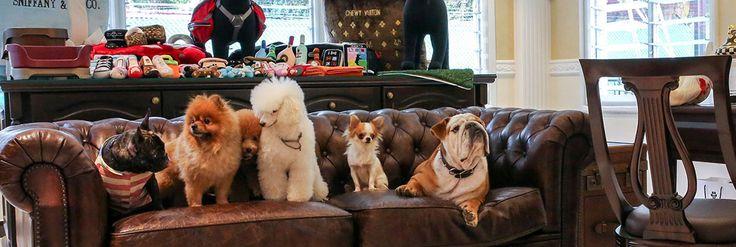 #Hotel dla psów #Wagington http://luxxx.pl/the-wagington-pierwszy-luksusowy-hotel-spa-zwierzat/