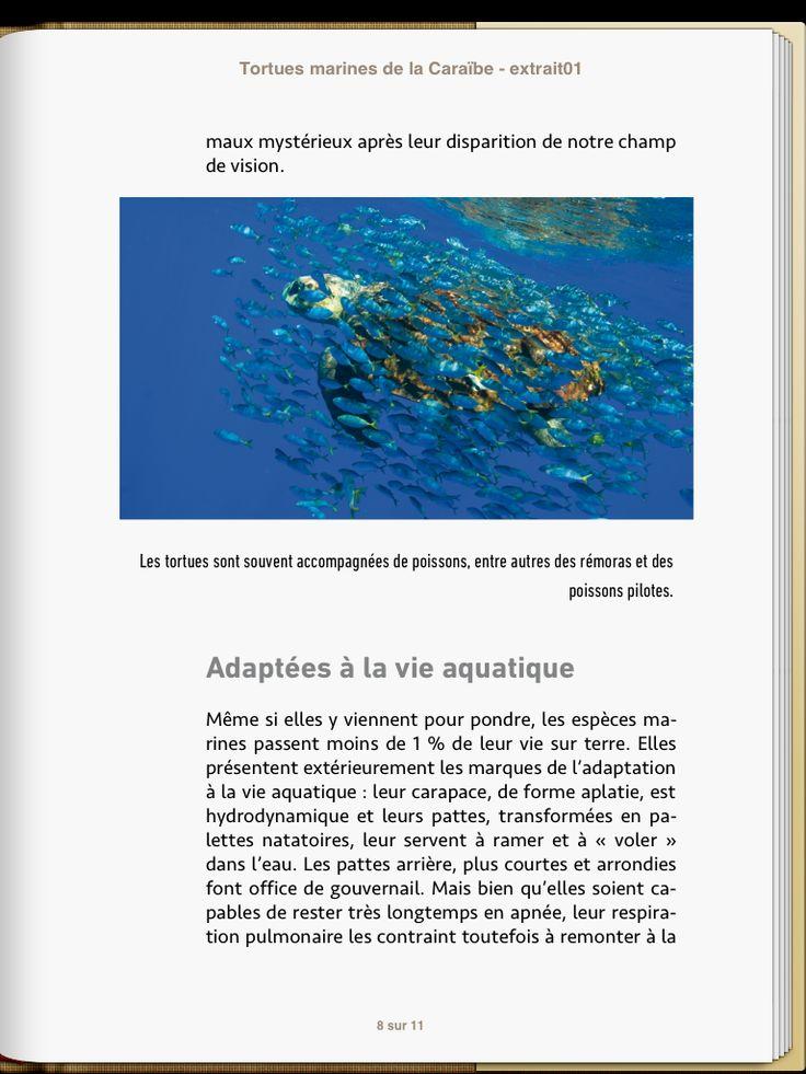 """ebook created by Audrey Keszek """"Tortues Marines de la Caraïbe"""" - Laurent Louis-Jean - SCITEP #epub #livrenumérique #ebook"""