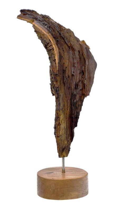 Engelflügel - Pflaumenbaum