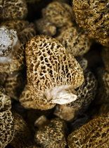 How to: Grow the elusive morel mushroom