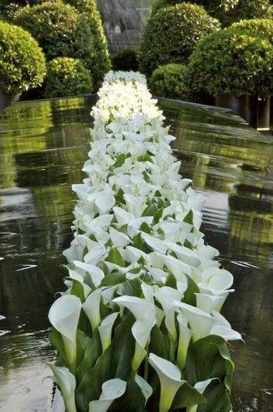 glorious calla lilies