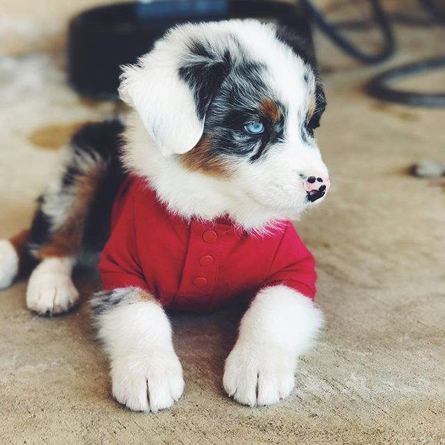 Our Christmas puppy! Here -Daily Bumps