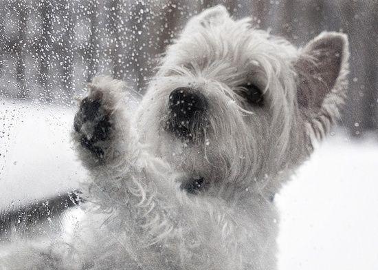 Cute Dog Left Outside