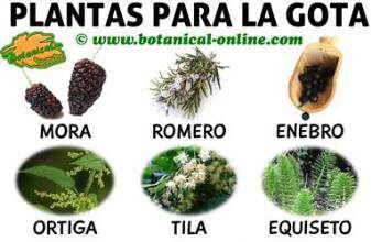 hierbas y plantas medicinales para el tratamiento natural gota