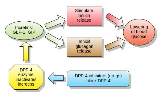Incretins and DPP 4 inhibitors - Dipeptidyl peptidase-4 inhibitor - Wikipedia…
