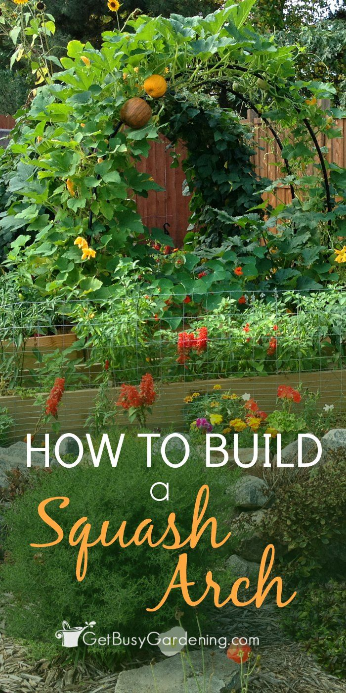Build a squash arch to add beauty to your vegetable garden. This is an easy, inexpensive DIY project that doesn't take much time to make.