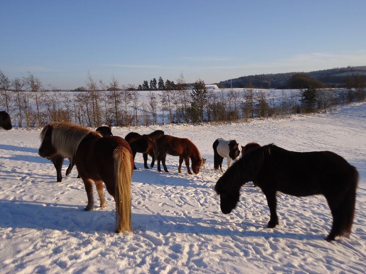 Dejligt vinterbilled på Vengedalen