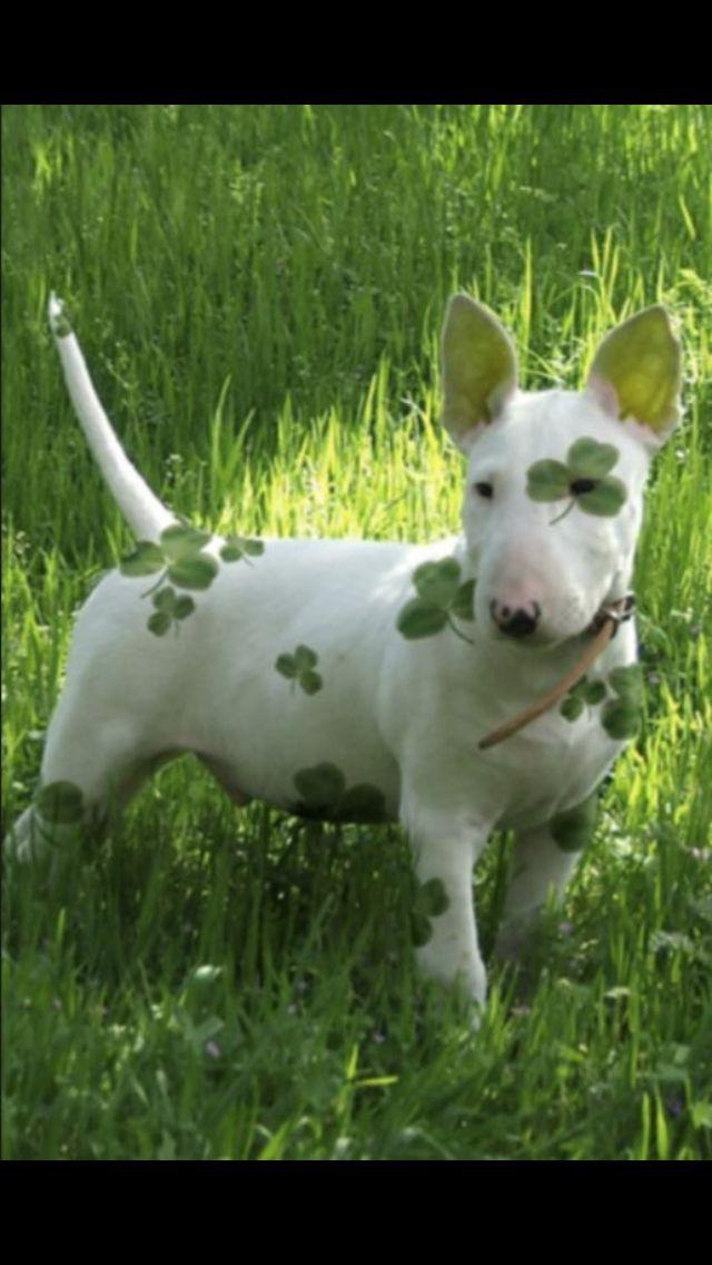 Happy St Patrick's Day !