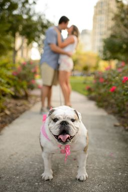 Darla the Bulldog steps in to steal the show during a couple's engagement photo shoot.