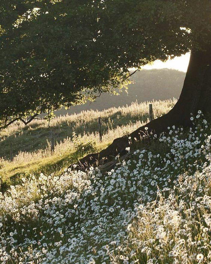 [New]  Die 10 besten Wohnaccessoires (mit Bildern) – Morgentore #inspiration #natur #home #daisy #favoriteflower
