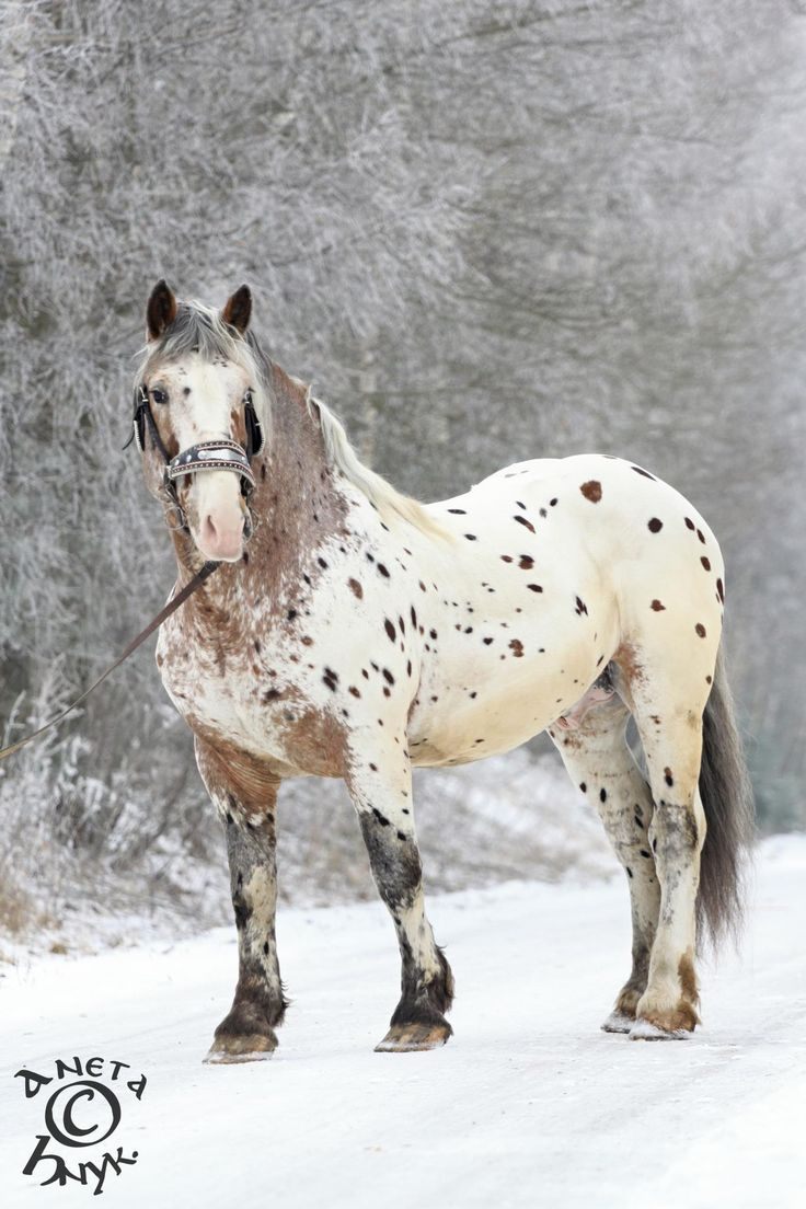 Heart of a Horse is a rescue center for horses that are in need.