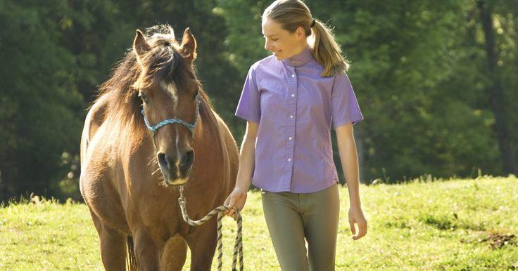 """Como tratar uma torção de tornozelo em cavalo. Um cavalo apresenta um entorse no tornozelo quando os ligamentos que sustentam a articulação do machinho ficam muito prolongados. O cavalo é tido como """"manco"""" e muitas vezes é sacrificado se o entorse for muito ruim. Para curar o entorse é necessário oferecer fisioterapia e uma série de exercícios com movimentos enquanto ele recebe outros ..."""
