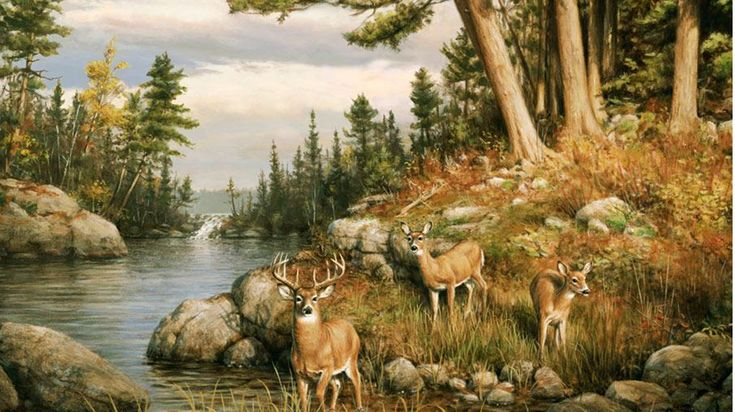 Animals wildlife murals deer wall murals wallpaper for Deer wall mural