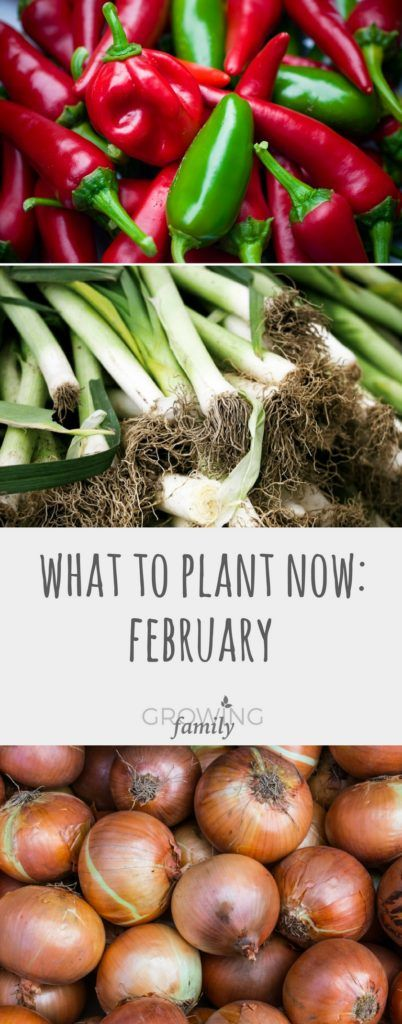 You don't have to wait for spring to grow new plants, some are very happy to get going in February. Here are my top picks for what to plant in February.