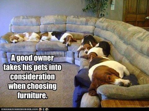 I consider my dogs first in just about everything I do - including buying the house I bought!