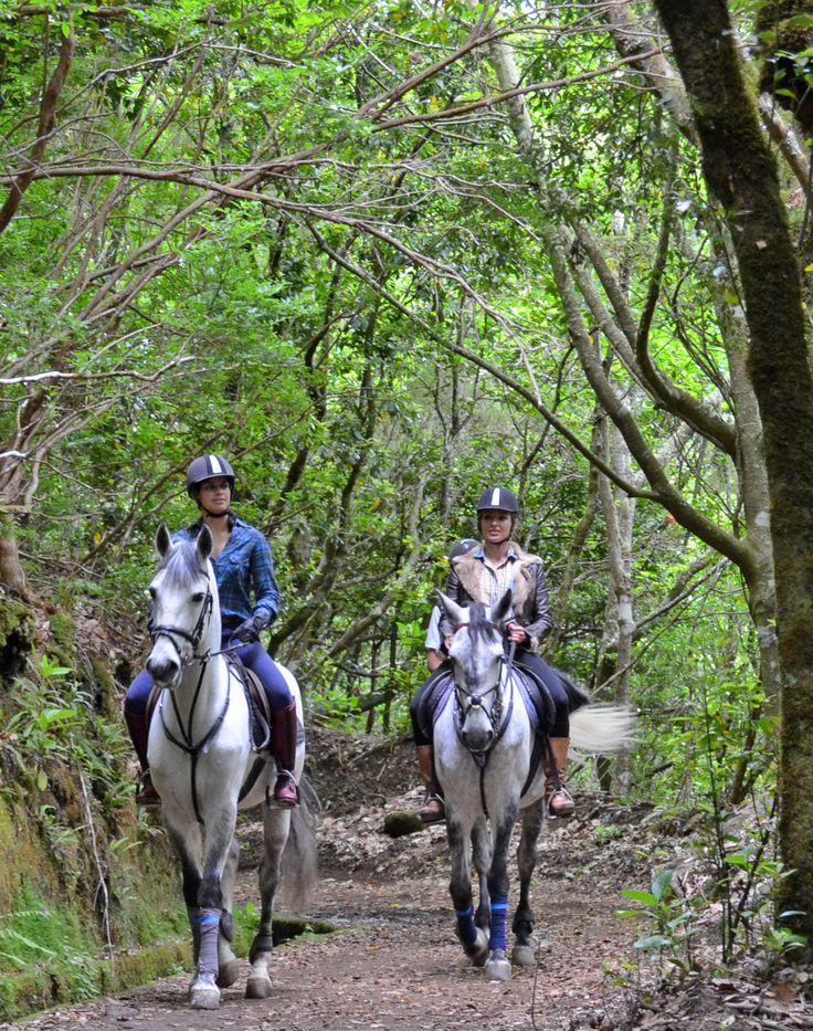 Madeira lovely Laurissilva forest* and Levada on horseback! *Unesco World Heritage  #madeira #nature #horsebackriding #horses #reiten #cheval #pferd #natur