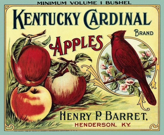 Kentucky Cardinal apples--right across the river from my hometown.