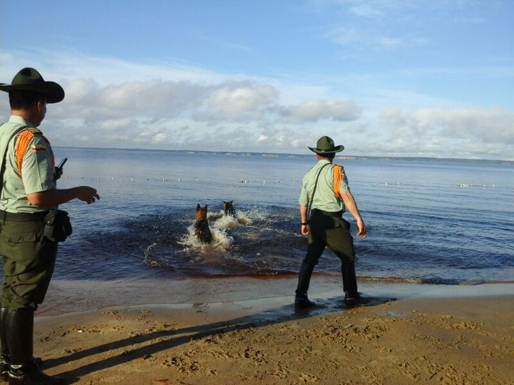 En Brasil nuestros perros trabajaron desde muy temprano luego se divirtieron un rato en la playa #CuadranteBrasil