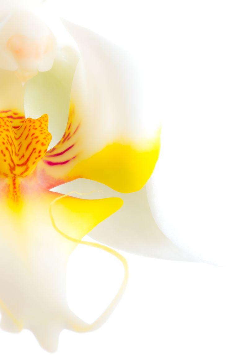 Flowers Archives - Chris Sutton Photography Orchid