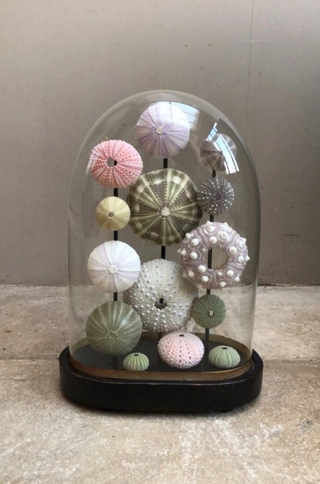 Best 25 Glass Domes Ideas On Pinterest Glass Bell Dome