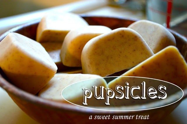 DIY: frozen dog treats this summer. Flax seeds, yogurt, peanut butter, and ice cube trays are all you need. Make your puppy happy in the heat!