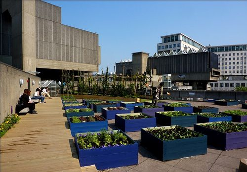 Det er blitt populært å dyrke grønnsaker i en rekke store byer. Dette er fra London. (Foto: xpgomes6/flickr.com)