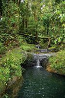 El agua, el aire, el paisaje y el reciclaje de nutrientes son algunos de los servicios ecosistémicos que proporciona la biodiversidad para e...