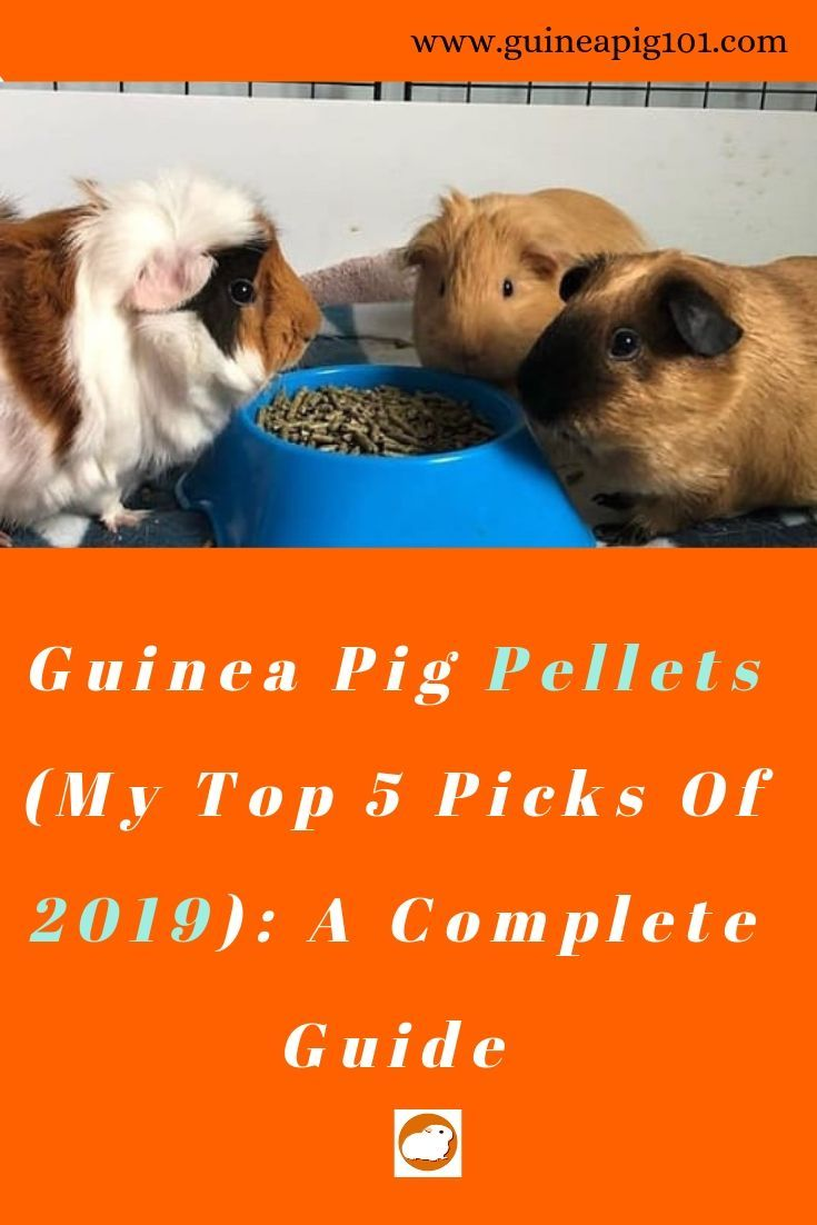 Pin On Guineas
