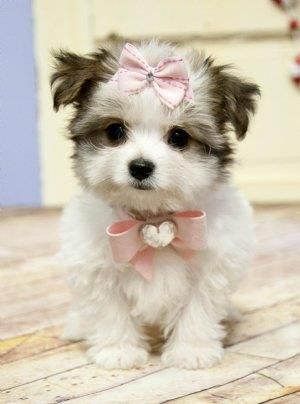 Essa linda cachorrinha foi passear um pouco e está perguntando se a roupa ficou boa?