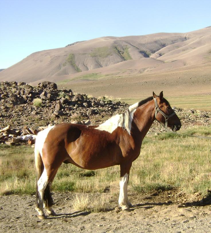 Caballo en la Cordillera de los Andes, Mendoza,  Argentina.  horse in the Andes, Argentine