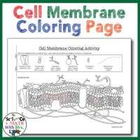 Best 25+ Cell membrane ideas on Pinterest | Cell structure ...